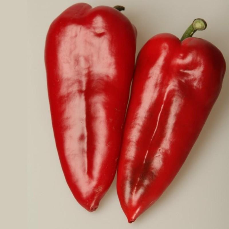 Paprika Seme Amfora  - 5