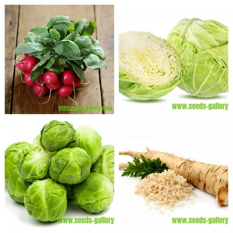 مجموعة من بذور الخضروات الروسية 1  - 1