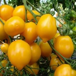 Tomato Seeds Lemon Plum