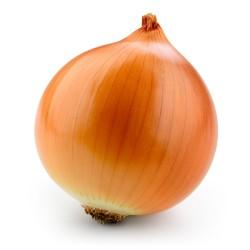 Onion Seeds Kupusinski Jabucar