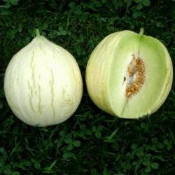 Melon seeds Hógolyó (Snow...