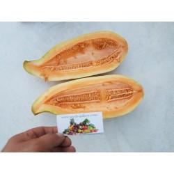 Sementes Banana Melon - Melão Banana - Exclusivo Exótico